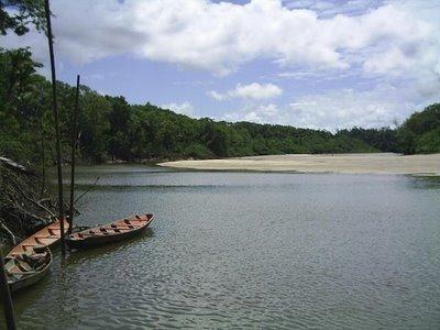 bLOGUE MARAJO s2020310hi3 - igarapé-ilha de Marajó