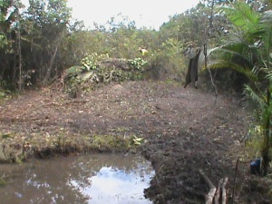 Sitio natureza 3 036